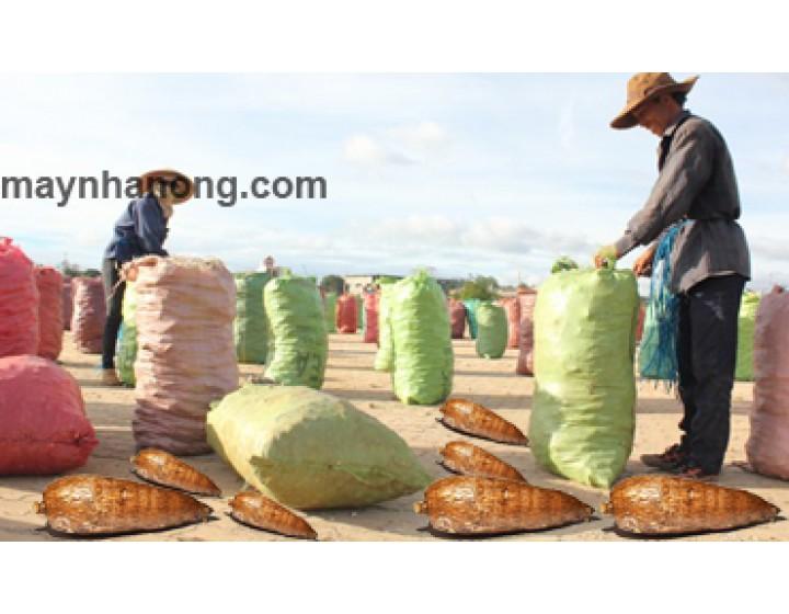 Kỹ thuật trồng, thu hoạch và bảo quản sắn