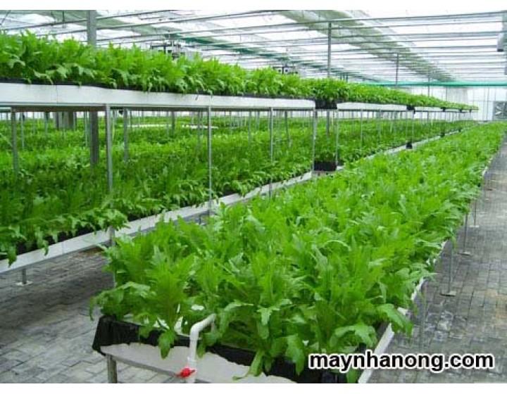 Xử lý phế phẩm trồng nấm làm giá thể trồng rau sạch