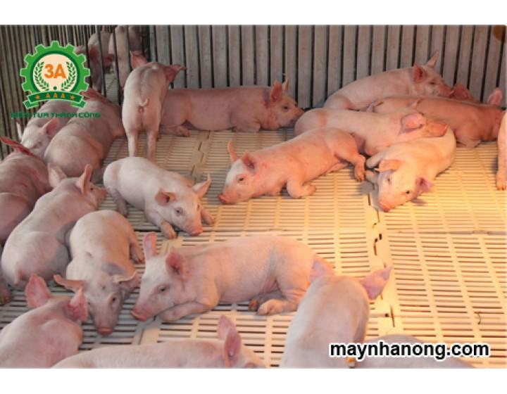 Nhu cầu dinh dưỡng của lợn con và những vấn đề cần lưu ý