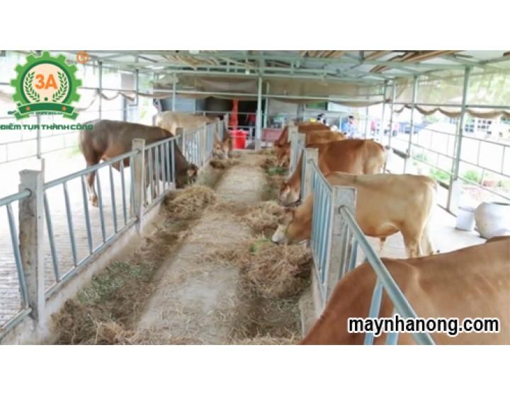 Mô hình nuôi bò thịt tại Trà Vinh