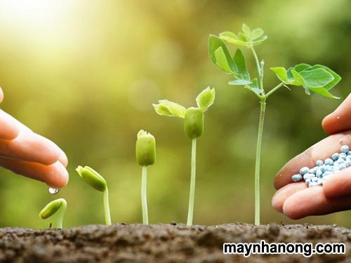 cách bón lót cho cây trồng