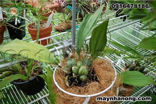 Cách trồng lan bằng giá thể xơ dừa