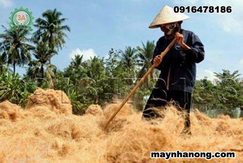 trồng lan bằng giá thể xơ dừa