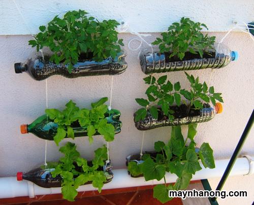 Cách trồng rau cải sạch