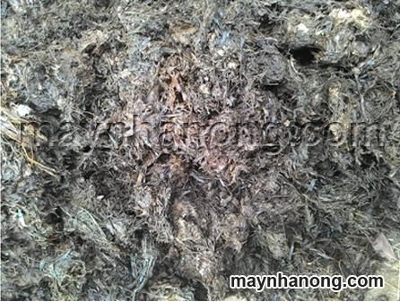 Phân hữu cơ được ủ bằng phân chuồng và rơm rạ