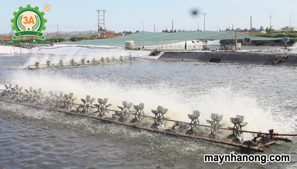 Kỹ thuật nuôi ghép cá nước ngọt