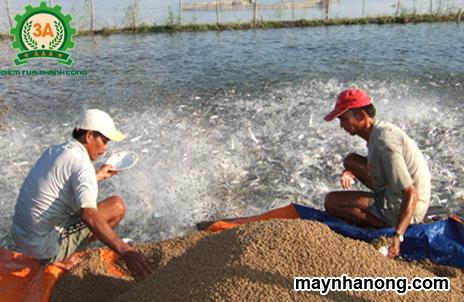Công thức pha trộn cám cá cho hiệu quả kinh tế cao