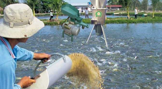Các loại thức ăn cho cá mang lãi xuất cao