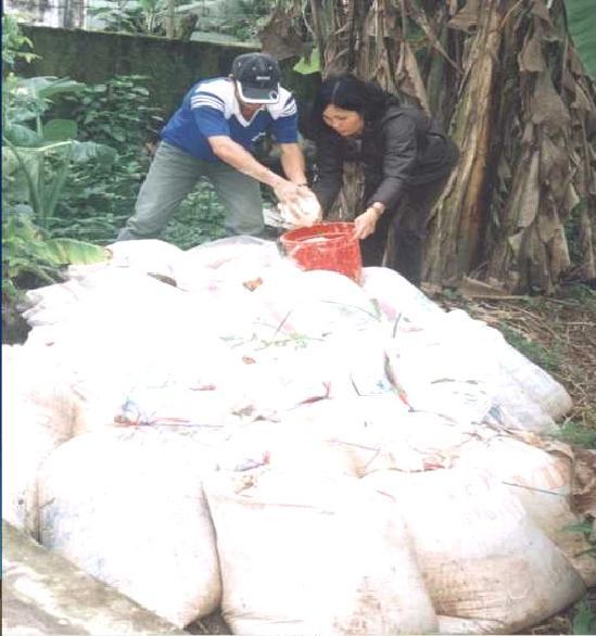 kỹ thuật ủ chua củ sắn làm thức ăn gia súc