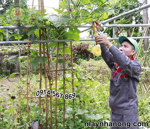 Kỹ thuật viên buộc cành cây